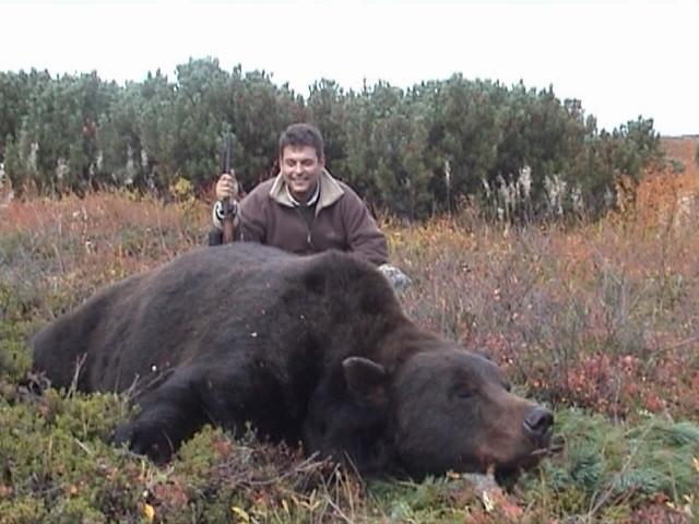 фото камчатский медведь